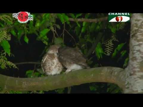 Nature and Life - Episode 118 (Wildlife Superstitions)