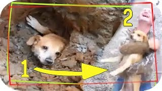 animal rescues that will restore your faith in humanity!