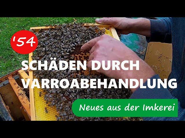 Schäden durch Ameisensäurebehandlung - Neues aus der Imkerei #54