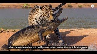 お笑い - 面白 - 動物の10狂気の戦いは、カメラを取り外します お笑い -...