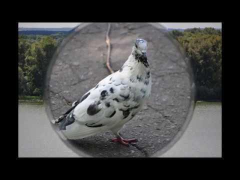 Астерикс и Обеликс в Британии.mp4из YouTube · Длительность: 52 с