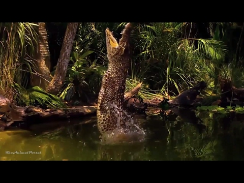 Amazing Animals Hidden Deep in the Jungle - Nature Documenta