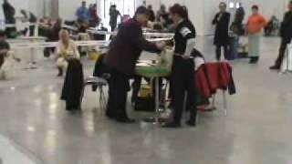 Wystawa Psów Kielce 2009(west Highland White Terrier)