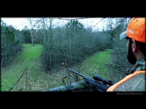 Deer Hunting At Burnt Pine Plantation In Georgia