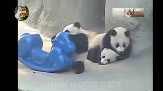 Приколы с животными - забавные панды | new crazy animals 45