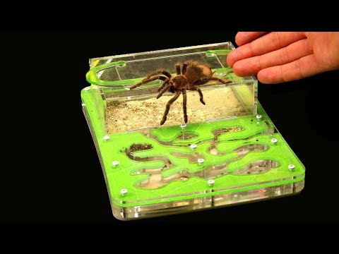 Вопрос: Что за паук?