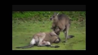 このチャンネルでは面白い・かわいい・いたずら好きな動物たちを紹介し...