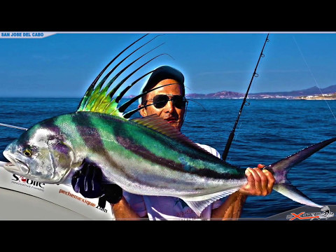 Fishing For Roosterfish, Cabo
