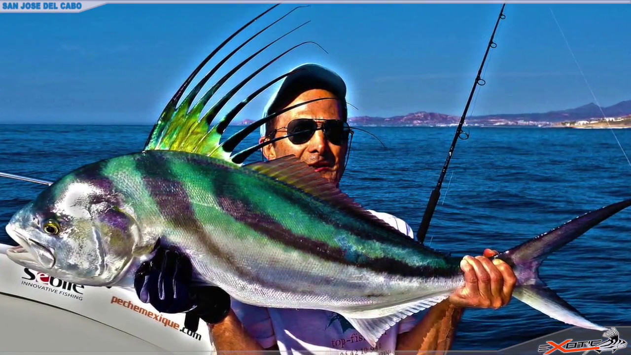 Fishing for roosterfish cabo youtube for Rooster fish pictures