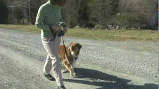 Chapel Hill Dog Training With Blue Dog-stops Pulling Challenge Part 2