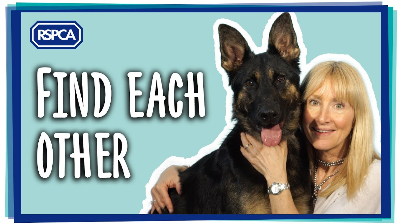 Rehome or Adopt a Pet & Help An Animal In Need | RSPCA