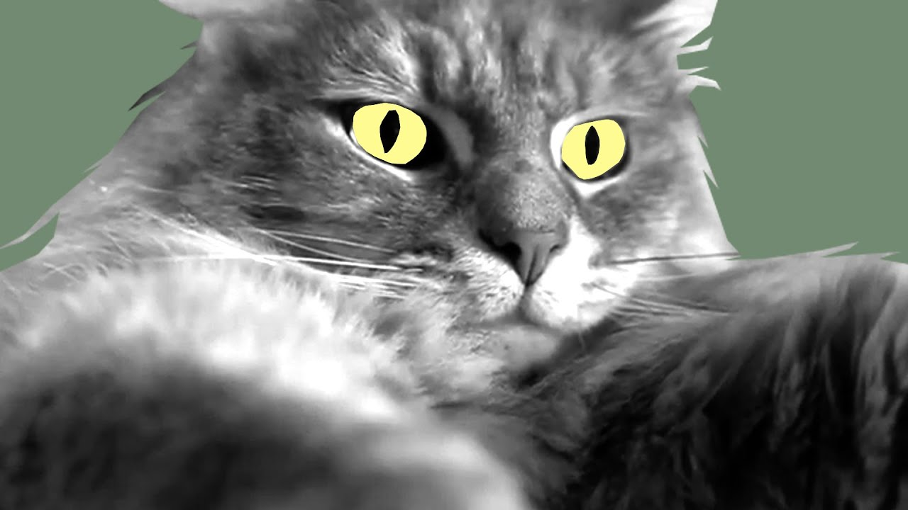 hyperthyroidism in cats signs and symptoms