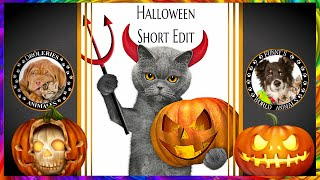 Cats & Dogs Spécial Halloween funny animals costumes Chiens & Chats Drôles Katze Perros