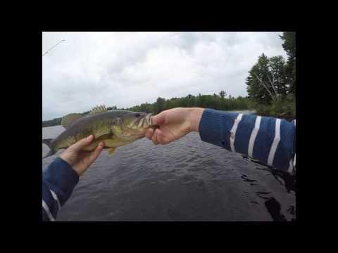 SLAYING Hogs At Golden Lake! (Fishing Golden Lake) Part 1 Of 3