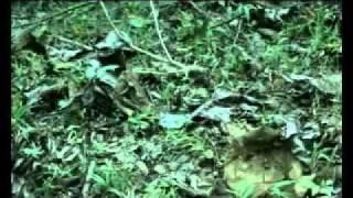 Repeat youtube video [หนังอาข่า] Logurkaq-โลกู่ข่า Ep.03
