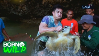 Born to Be Wild: Green Sea Turtle Release in Western Samar