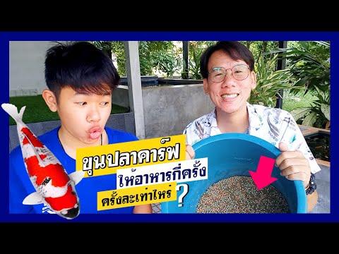 เทคนิคขุนปลาคาร์ฟ  ให้อาหารบ่อยแค่ไหน  ครั้งละเท่าไหร่?  l  คุณพ่อคราฟ