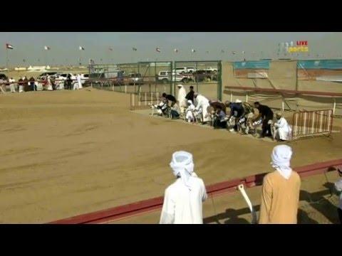 سباق السلوقي التأهيلي الشوط الأول اناث - مهرجان سلطان بن زايد التراثي 2016