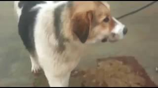 Молодая собака 2 поездки Айтжана Алибекова  Мангыстау