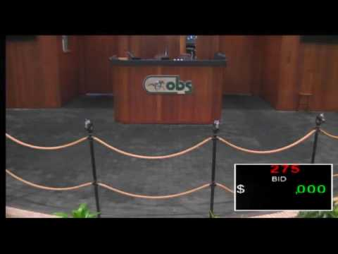 OBS 2016 August Open Yearling Sale, Day 1