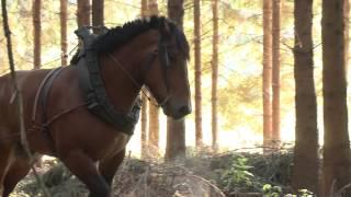 Mathieu LOUIS, débardeur au cheval en Province de Luxembourg Belgique