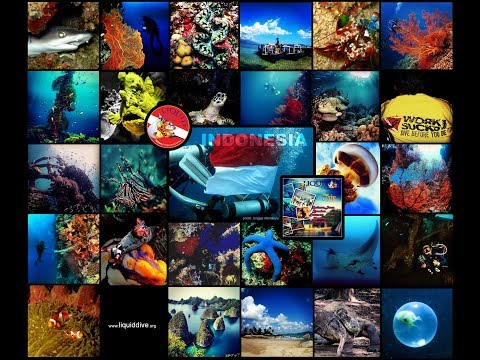 WONDERFUL underwater INDONESIA #1