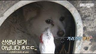 そこのけそこのけ、鳥さんが通るぞ!韓国の村を占拠したノバリケンの一団