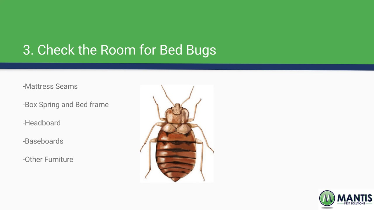 Watch Bringing Home Bed Bugs video