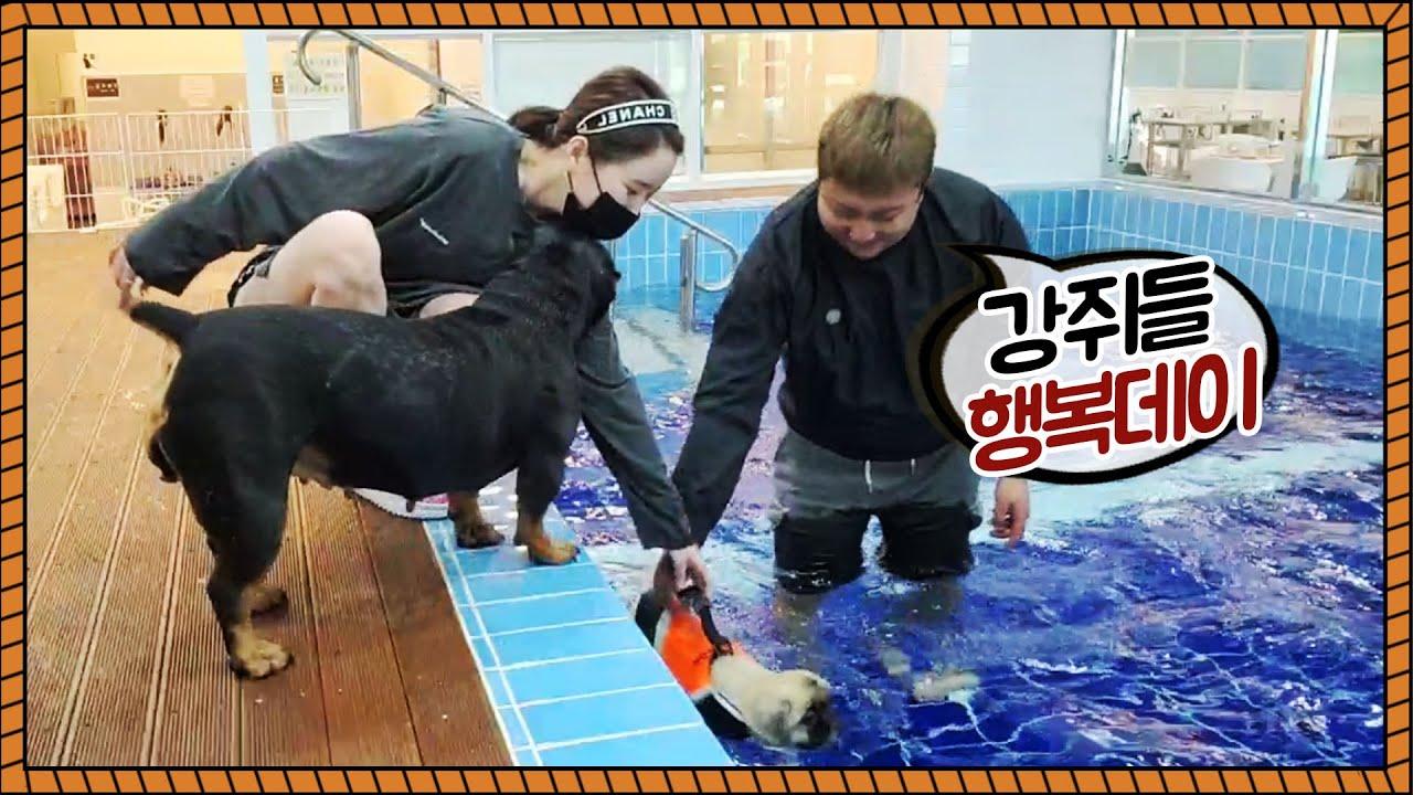 가현이랑 강아지들의 행복데이