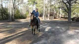 Laredo - 9 y/o reg. Quarter Horse