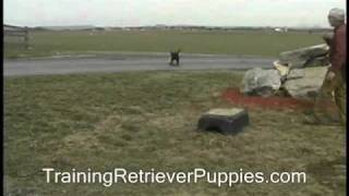 Retriever Training - Introduce Taking Avoidable Hazards Lab Puppy