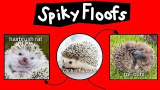 spiky-floofs-cactus-hamsters-heb-hobs-internet-names-for-hedgehogs