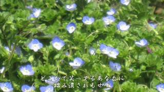 蝶 - 柴田淳 Cover by pipi.