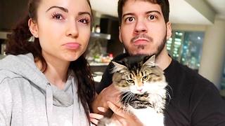 OUR KITTEN IS SICK