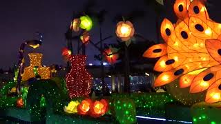 2019 02 20 Lunar New Year Thematic Lantern Display Glittering Peacocks in Full Bloom 雀屏春瑞耀香江