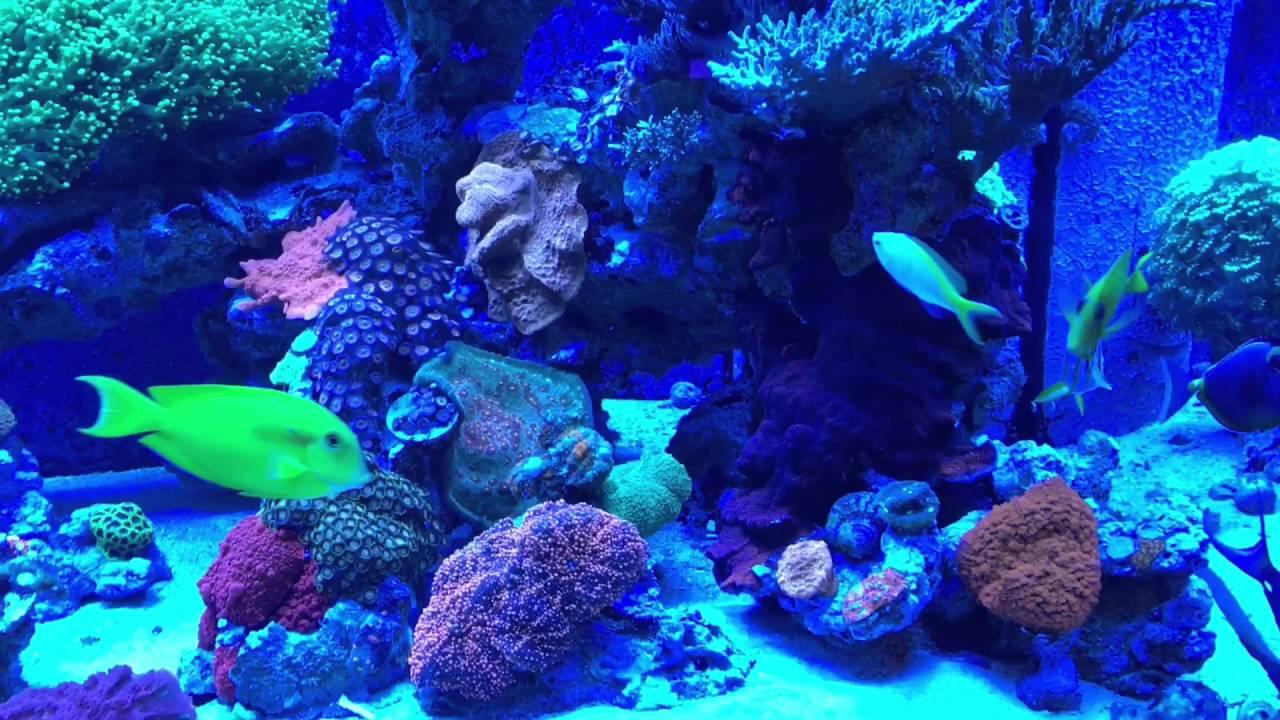 Living Reef Orlando   LFS 300 Gal Marineland DD Display Mixed Reef Tank    YouTube