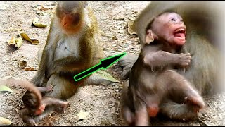 Poor Life From Evil Mum Anna Baby Monkey ALBa Cries Out Loudly Hurt | Anna Hit Alba's Head To Land