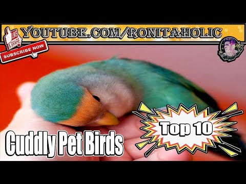 Top 10 Most Affectionate Birds in The World || Parrots and Parakeets