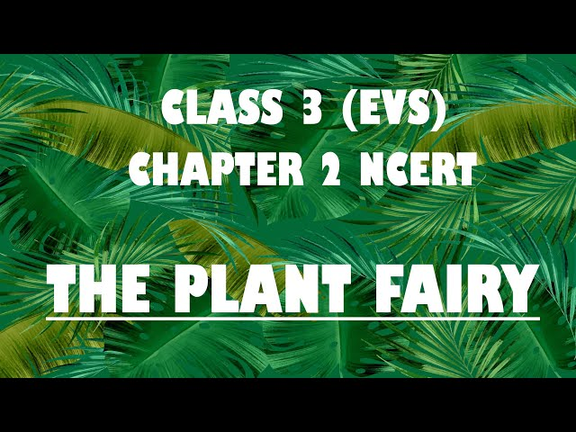 NCERT Class 3 EVS Chapter 2 'The Plant Fairy' explanation | CBSE Class 3 EVS Chapter 2