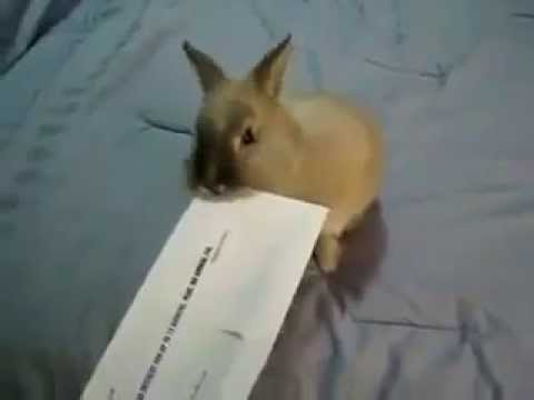 how to open a envelope