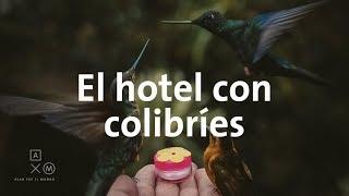 El Valle de Cocora y el Hotel de los colibríes   Alan por el mundo Colombia #4