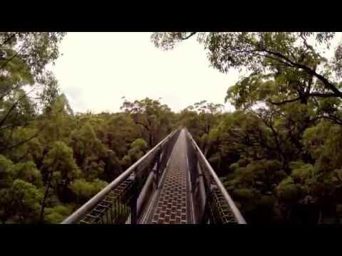 Tree Top Walk @ Denmark, Western Australia