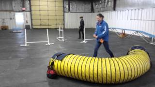 Doberman Puppy In Agility Training