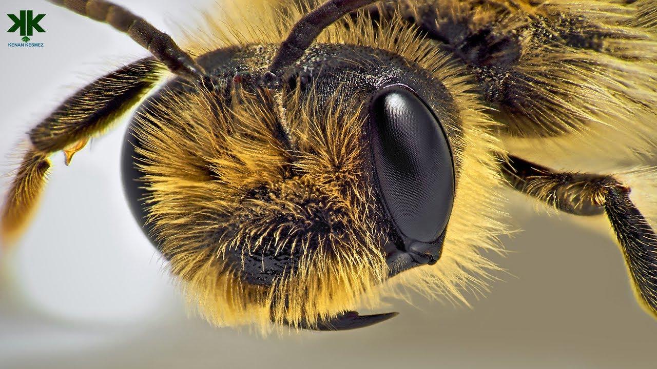 Download Arılar hakkında ilginç bilgiler