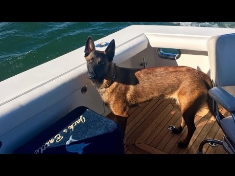 Pet Central - After falling overboard she swam 6 miles and walked 12 to find her owners