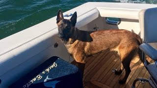 Dog Swam 6 Miles, Walked 12 More To Reunite With Family After Falling Off Boat