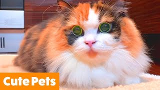 Cutest Dogs and Cats   Funny Pet Videos