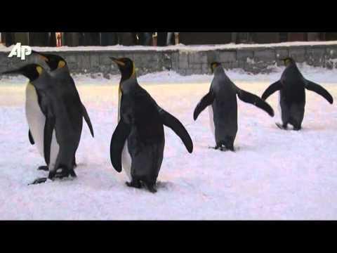 Arctic Penguins Arrive in Dubai