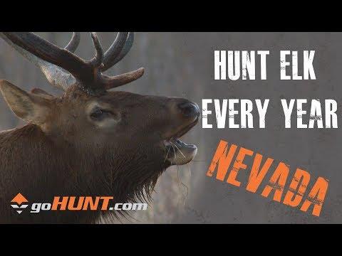 Hunt Elk Every Year: Nevada Elk