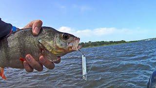 ОКУНЯРЫ жрут всё подряд! Рыбалка на реке Дон